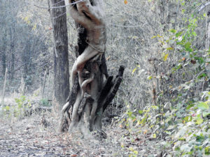 The Strangler wraps around a victim tree and begins sucking nutrients out of it.