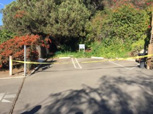 A deceased man was found in this wooded area near the Pacific Palisades Woman's Club on Nov. 3, 2016.